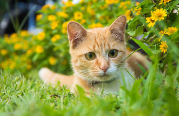 little cat in the garden