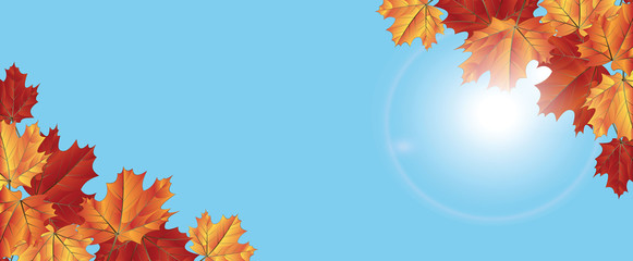 Autumn maple leaves , the sun shines through the leaves on a background of blue sky. For banners and websites,flyers ,Wallpapers, etc Vector illustration.