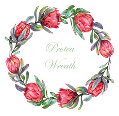 Hand-drawn watercolor illustration of the wreath with red protea flowers. Exotic tropical and colorful blossom of beautiful flowers. Isolated on the white background