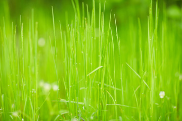green grass texture abstraction