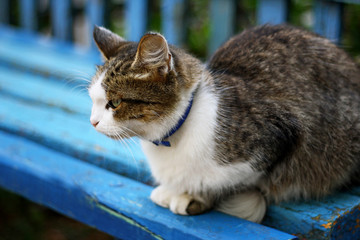 Cat on the blue bench.