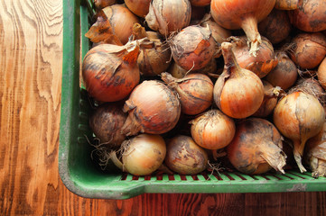 Onions in a basket on a wooden background