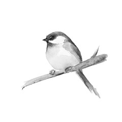Small bird on branch. Black and white watercolor painting.