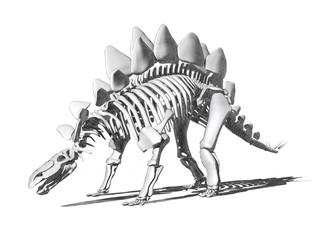 Stegosaurus Skeleton Drawing