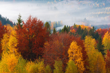 Autumn landscape with morning fog