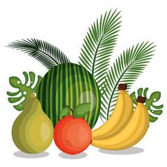 set cartoon fruits tropicals design vector illustration eps 10