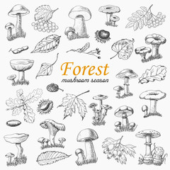 Set of isolated forest plants and mushrooms in sketch style