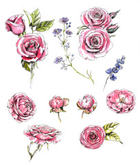 Collection of the hand-drawn roses and floral elements. Line art and watercolor. Set of the different flowers for floral compositions, decoration