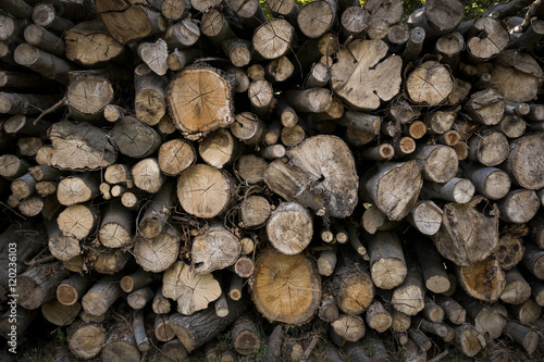Bois arbre tronc coupe b cheron chauffage st re for t photo libre de droits sur la banque d - Arbre fruitier comme bois de chauffage ...