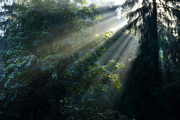 Beams of morning sunlight in a deep, dark forest