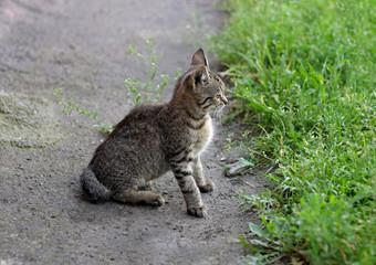 Kitten near the grass.