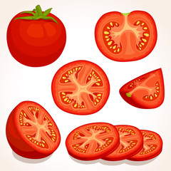 Set of different tomatoes isolated on background. Vector illustration. Whole, sliced, quarter, half of a tomato fruit.