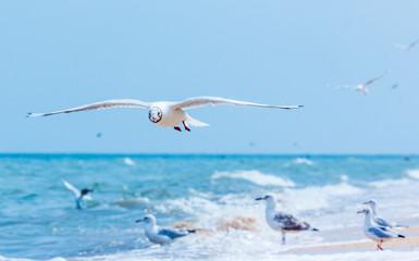 Gulls flying on the beach