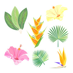 Set of tropical exotic palm leaves & flowers. Vector.