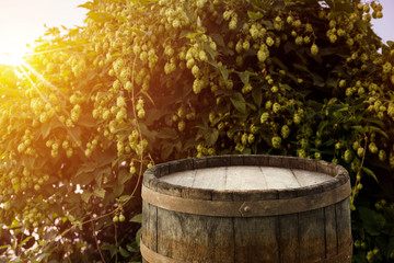 blurred background of hop plantation and sun light and desk