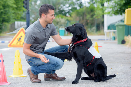 dog trainer in street
