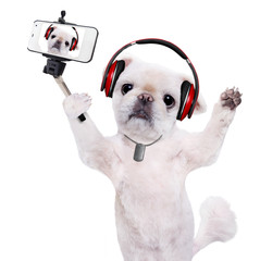 Dog headphones taking a selfie with a smartphoner. Isolated on the white.