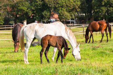 Horses Newborn Foals in field breeding farm