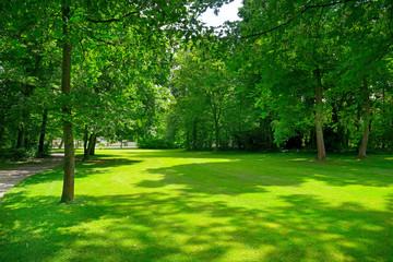 Beautiful clearing in park - fototapety na wymiar