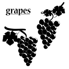 Vector illustration of grapes.