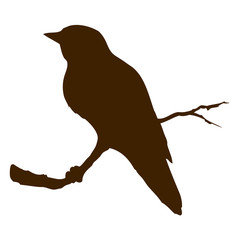 Bird. Vector drawing