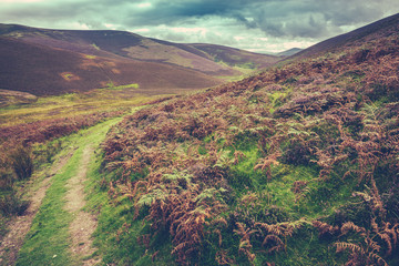 Scottish Borders Rural Landscape