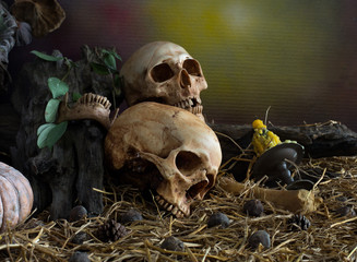 Old Skull on dried timber and pile of straw in dim light dark ni
