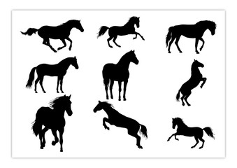 Silhouette of Horse with many style and perspective Pack