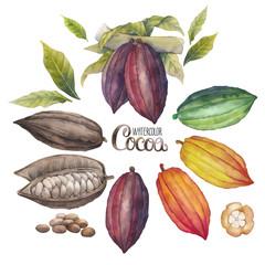 Watercolor cocoa fruit