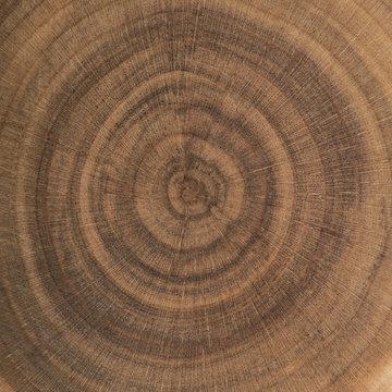 End grain wood rings texture