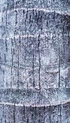 Tree bark background ,texture