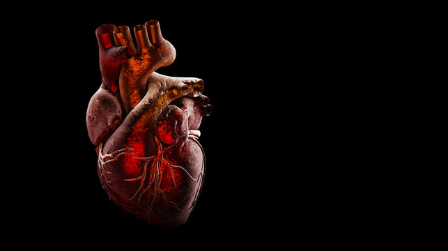 Anatomy of Human Heart Isolated on black