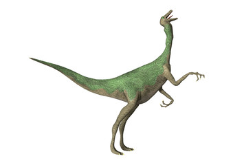 3D Rendering Dinosaur Gallimimus on White