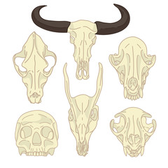 A set of silhouettes of skulls of animals and humans. Collection of linear skull goats, cats, dogs and humans. Figure skull bone in cartoon style. Isolated color animal, human skull. Vector.