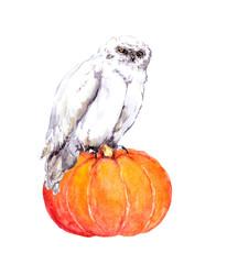 White owl on pumpkin. Halloween watercolor