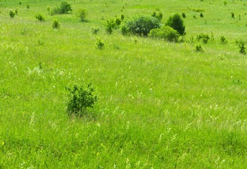 Meadow bushes background