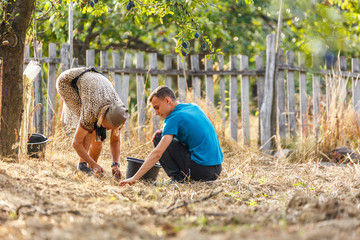 Old farmer and her grandson picking plums