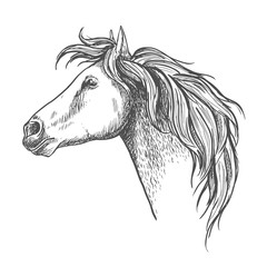 Racehorse head sketch for horse racing design