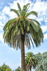 Palms in botanical garden in Batumi