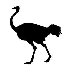adult ostrich vector illustration black silhouette