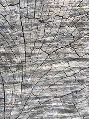 surface section of body tree texture