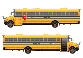 School bus, vector illustration. Isolated on white