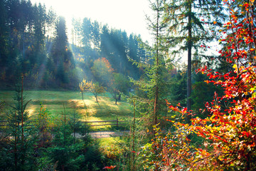 Fototapete - Autumn nature scene. Beautiful morning misty old forest and meadow