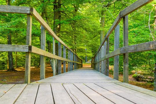 Wooden wheelchair ramp or path in Soderasen national park in Sweden.