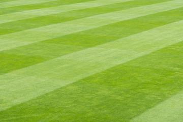 Greensward field background