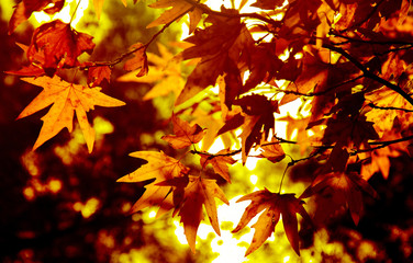 Autumn. Fall. Autumn trees and leaves in sun rays