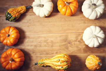 Colorful assorted pumpkins and squashes