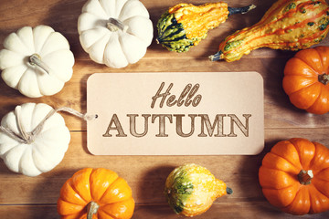 Hello Autumn message with colorful pumpkins