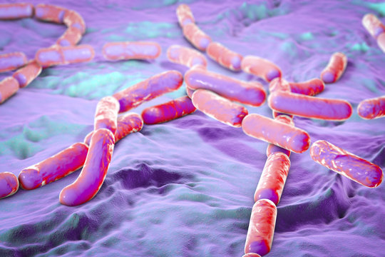Bacillus cereus, gram-positive spore-producing bacteria arranged in chains which cause food poisoning. 3D illustration