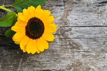 Decorative sunflower on wooden background